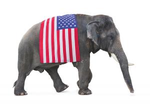 Elephant w flag